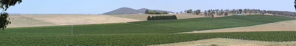 Panorama del viñedo del valle de Yarra Fotografía de archivo libre de regalías