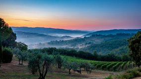Panorama del viñedo toscano cubierto en niebla en el amanecer cerca de Castellina en Chianti, Italia imagenes de archivo