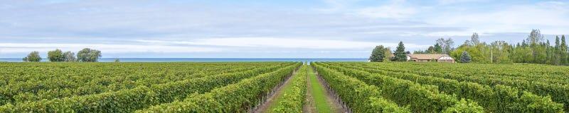 Panorama del viñedo por el lago Ontario Imagen de archivo libre de regalías