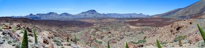Panorama del vulcano Teide e dei fiori di Tajinaste Immagine Stock