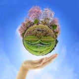 Panorama 360 dell'albero di tromba rosa con la mano Immagine Stock