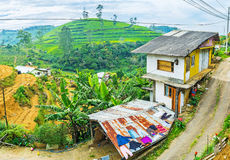Panorama dell'azienda agricola dello Sri Lanka Immagini Stock