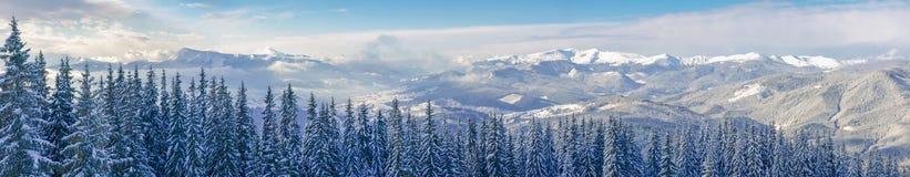 Panorama dell'inverno Carpathians con la foresta attillata in un foregroun Fotografia Stock
