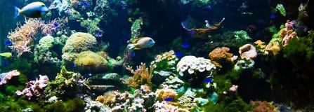 Panorama della barriera corallina Immagine Stock