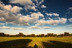 Panorama della campagna con di olivo e le nuvole sceniche Immagini Stock