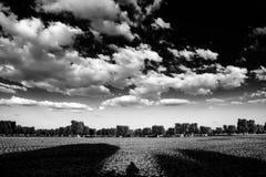 Panorama della campagna con di olivo e le nuvole sceniche Fotografie Stock Libere da Diritti