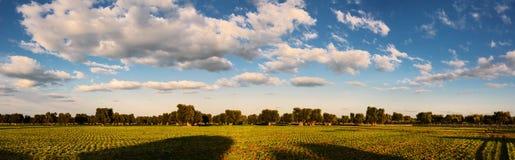 Panorama della campagna con di olivo e le nuvole sceniche Fotografia Stock Libera da Diritti