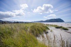 Panorama della costa del Pacifico con erba alta sulle dune di sabbia Immagini Stock Libere da Diritti