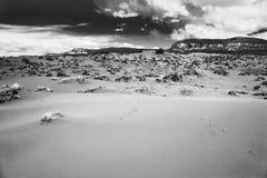 Panorama della duna di sabbia dentellare Immagini Stock
