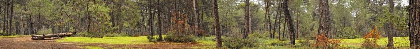 Panorama della foresta Immagini Stock Libere da Diritti