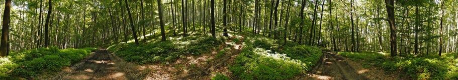 Panorama della foresta Fotografie Stock Libere da Diritti