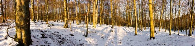 Panorama della foresta Fotografia Stock Libera da Diritti