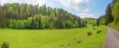 Panorama della foresta con il percorso/strada - valle di Wental, Germania Immagini Stock Libere da Diritti