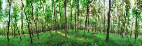 panorama della foresta da 360 gradi Fotografie Stock