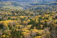 Panorama della foresta di autunno. Fotografie Stock