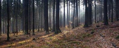 Panorama della foresta di autunno Immagine Stock
