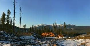 Panorama della foresta di inverno Immagine Stock Libera da Diritti