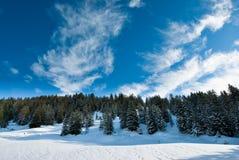 Panorama della foresta di inverno Fotografia Stock