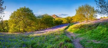 Panorama della guarnizione di Roseberry da Newton Wood fotografie stock libere da diritti