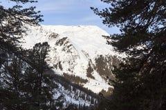 Panorama della montagna con neve, gli alberi ed il cielo blu nell'inverno nelle alpi di Stubai Immagini Stock
