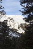 Panorama della montagna con neve, gli alberi ed il cielo blu nell'inverno nelle alpi di Stubai Fotografia Stock