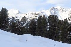 Panorama della montagna con neve, gli alberi ed il cielo blu nell'inverno nelle alpi di Stubai Immagini Stock Libere da Diritti