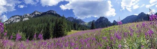 Panorama della montagna dalla valle Immagini Stock Libere da Diritti