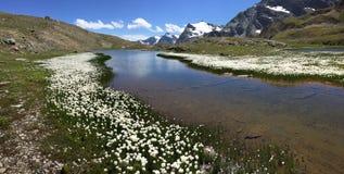 Panorama della montagna: un piccolo lago con i fiori bianchi (Eriofori, en Fotografia Stock