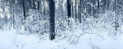 Panorama della neve nella foresta di inverno Fotografia Stock