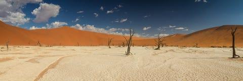 Panorama della pentola morta del sale di Vlei Fotografie Stock