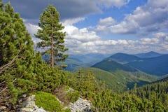 Panorama della primavera di un lago della foresta immagini stock
