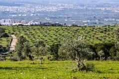 Panorama della provincia di Granada, con di olivo. L'Andalusia Fotografia Stock Libera da Diritti