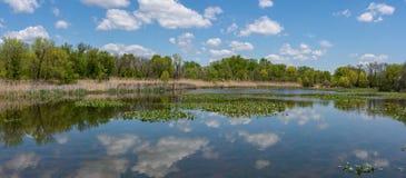 Panorama della riserva immagini stock libere da diritti