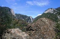 Panorama della sequoia Fotografie Stock Libere da Diritti
