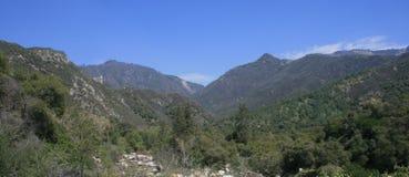 Panorama della sequoia Immagine Stock
