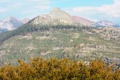 Panorama della sosta di Nationa della sequoia Immagine Stock
