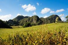 Panorama della valle di Vinales con il Mogotes Fotografia Stock