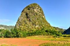 Panorama della valle di Vinales - Cuba Immagini Stock