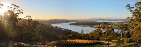 Panorama della vigna in valle di Tamar, Tasmania Fotografia Stock Libera da Diritti