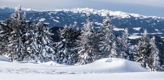 Panorama delle alpi del austrain di inverno con i picchi, la neve e gli alberi di montagna Fotografia Stock