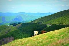 Panorama delle alte montagne Immagine Stock Libera da Diritti
