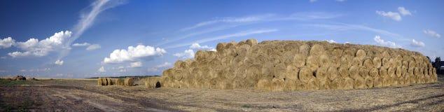 Panorama delle balle di paglia su un campo wheaten Immagini Stock