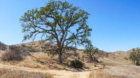 Panorama delle colline di California fotografie stock
