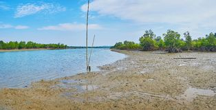 Panorama delle mangrovie dal fiume, Ngwesaung, Myanmar immagini stock