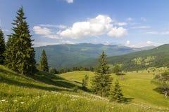 Panorama delle montagne carpatiche di estate con il pino solo Fotografie Stock