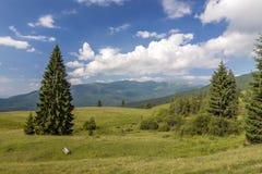 Panorama delle montagne carpatiche di estate con il pino solo Fotografie Stock Libere da Diritti