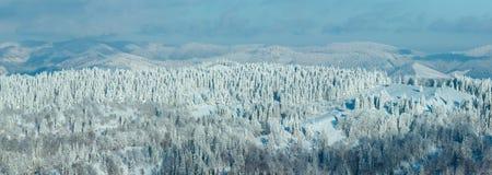 Panorama delle montagne carpatiche di inverno Fotografia Stock Libera da Diritti