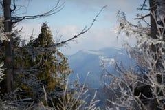 Panorama delle montagne carpatiche di inverno con la foresta dell'abete sui pendii Panorama ad alta definizione del punto di due  Immagine Stock Libera da Diritti