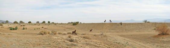 Panorama delle pecore del Big Horn - sculture del metallo Immagini Stock Libere da Diritti