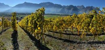 Panorama delle vigne di autunno in Svizzera Fotografie Stock Libere da Diritti